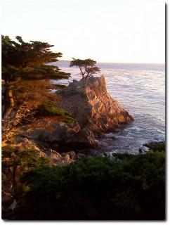 Lonley Cypress im Sonnenuntergang