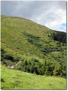 Nahrhafter Trail unterhalb der Galtialp