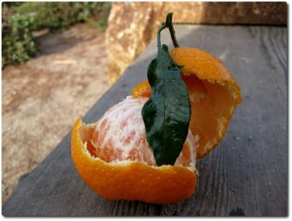 Eine perfekt schmeckende Mandarine
