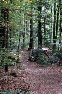 Trail durch den Rüttenenwald