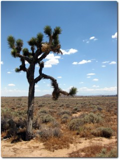 Mojave 01