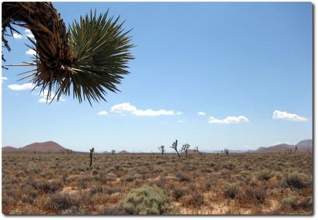 Mojave 02