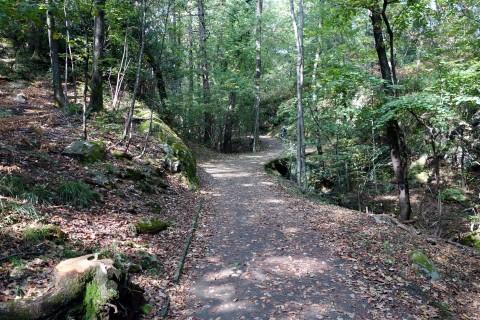 Aufstieg via Monte Verità