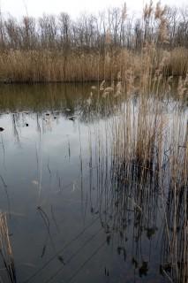 Teich im Bois des Mouilles 2