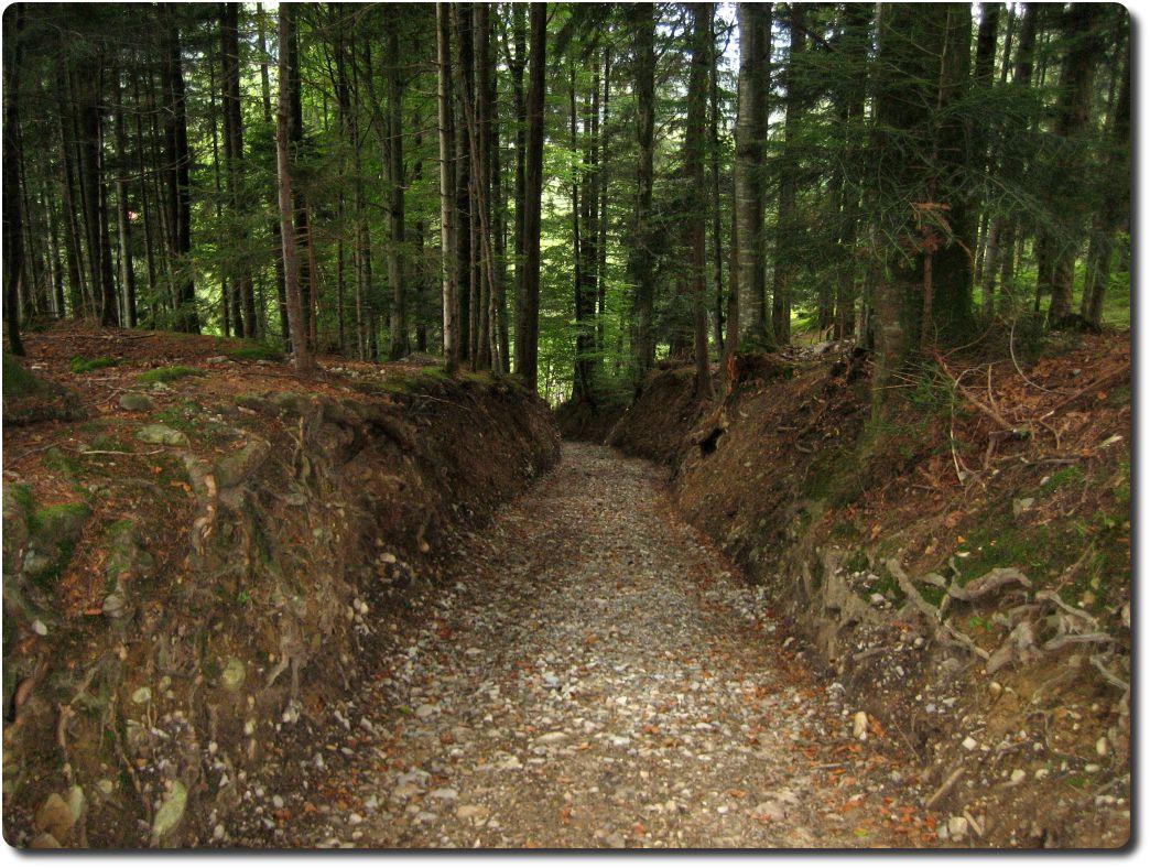 Mountainbike-Tour Bantiger ll mit Touren Beschrieb, Topo Karten und ...