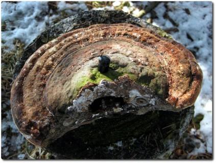 Nano Geocache in einem Pilz versteckt...