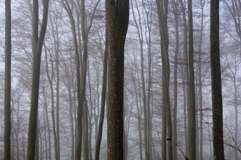 Nebelimpressionen Wald
