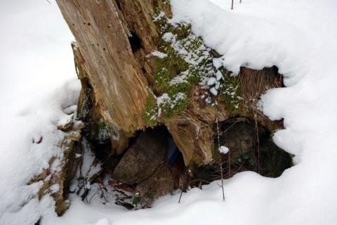 Baumstrunkcache - Gefunden trotz Schnee