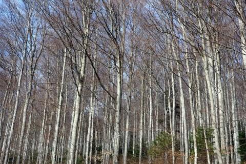 Der Wald ist noch nicht grün...