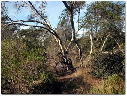 Fort Ord - Trail No 59 - Blair Witch