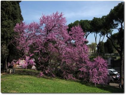 Frühling auf dem Palatin