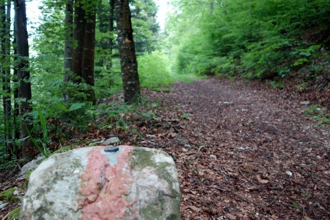 Entlang der Kantonsgrenze zum Vogelberg