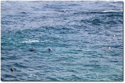 Sechs Harbor Seals am 17 Mile Drive