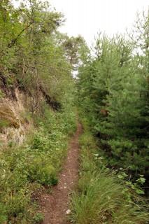 Singletrail durch den Pfynwald