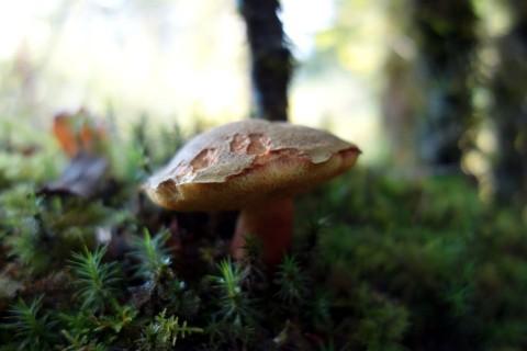 Viele Pilze im Wald