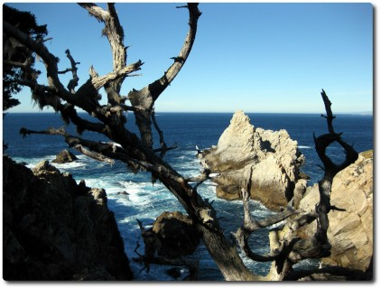 Point Lobos - Guillemot Island (?)