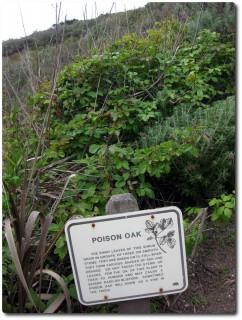 Point Lobos - Poison Oak Warnhinweis