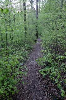 Trails im frischen Grün