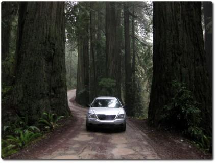 Grosse Redwoods - kleines Auto