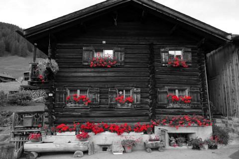 Rote Blumen 1