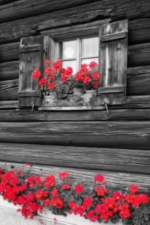Rote Blumen 3