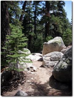Armstrong Trail - kleiner Rockgarden