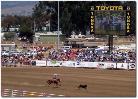 Salinas Rodeo - Fang die Kuh