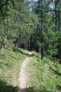 Flowiges ausrollen durch den Dürrwald