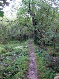 Rare echte Trails im Hinterland