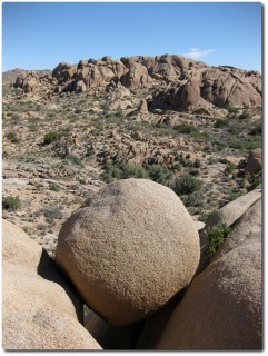 Joshua Tree NP - runder Fels