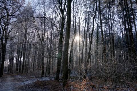 Wunderbarer Frostwald
