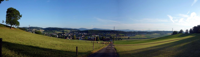 Kühe und Panorama Safenwil