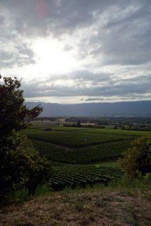 Singnal de Bernex - Blick über die Reben