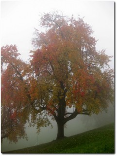 Nebel im Aufstieg zum Schönebode