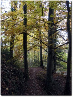Steinibachtrail in Herbstfarben