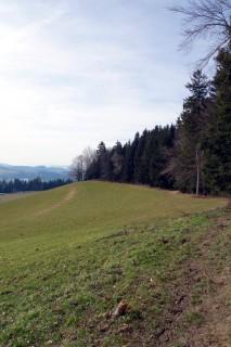 Waldrandtrail bei Schellenberg