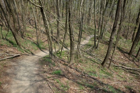 Settepani Downhill 1