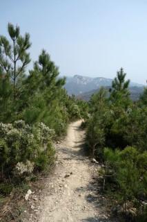 Settepani Downhill 2