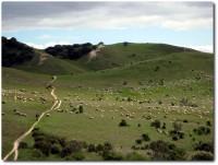 Goat Trail - Heute Sheep Trail