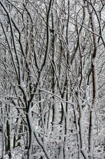 Schneeimpressionen