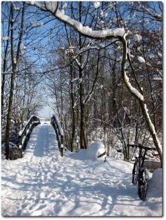 Wintertrails entlang der Aare