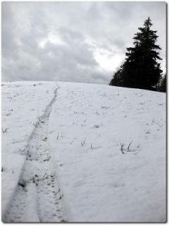 Das Schneebiken beginnt wieder...