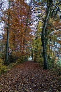 Solothurntrails - Herbstwald
