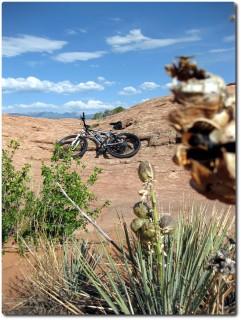 Slickrock Bike Trail - karge Vegetation