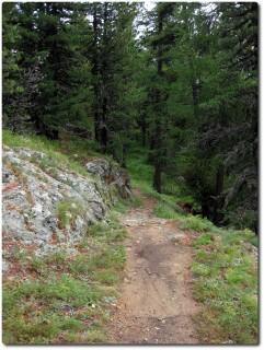 Trails im Stazerwald