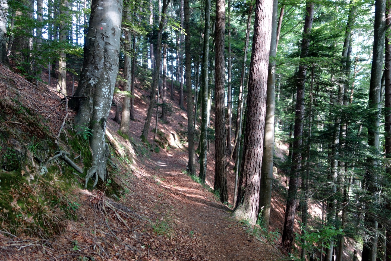 Langnauer Downhill Park | Traildevils
