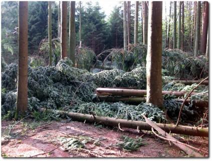 Sturmschäden in Berner Wäldern