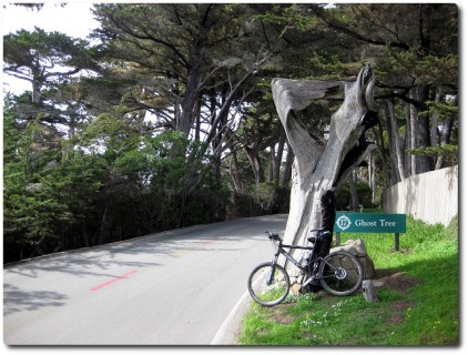 17 Mile Drive - Ghost Tree