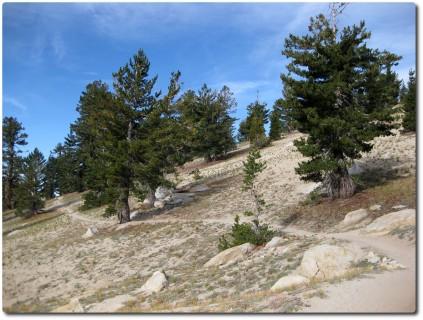Tahoe Rim Trail - Flowiger Beginn