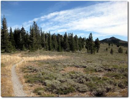 Tahoe Rim Trail - Ab hier geht es nur noch runter !